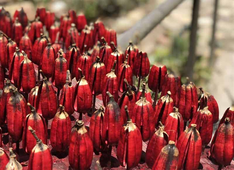 red agave seed pods